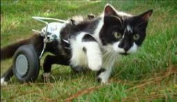 Cadeira de rodas para animais (cachorro, gato, coelho)