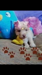 Femea Poodle Micro