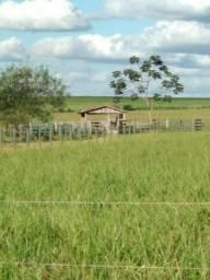Fazenda de 39 Alqueires no Município de Paranavaí