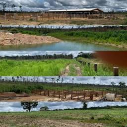 TERRA EM APUÍ AMAZONAS