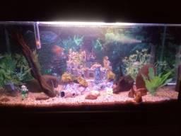 Decoração de aquário