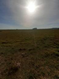 SSV Imóveis Apresenta, 320 hectares arroz, soja, gado, veja