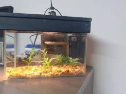 Aquário com filtro biológico e iluminação