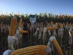 Fazenda enorme, 40.000 ha, alta produt., Agricultura e Pecuária, Santana do Araguaia/PA