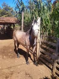 Vende-se  cavalo palosa