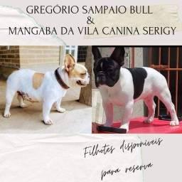 Macho filhote de Buldogue Francês - Vila Canina Serigy