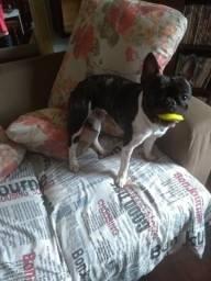 Hospedagem canina em Lavras-MG