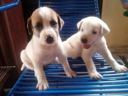 Duas cachorrinhas