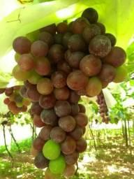 Produtos selecionados frutas legumes e hortaliças