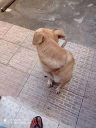 Doação de cão