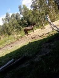 Vendo Cavalo Lubuno 3 anos e Meio