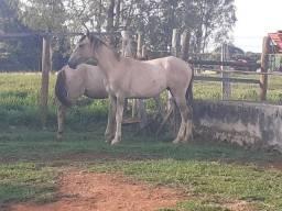 Cavalos: Vendo 3 potros