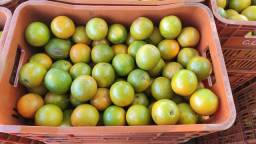 Vendo laranjas médias ... Grandes quantidades