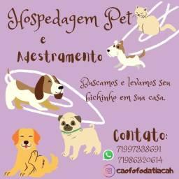 Adestramento, hospedagem educativa, pett sitter, hotel pet para cães e gatos
