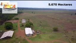 Excelente Fazenda com 5.670 Hectares- Área Rural de Porto Velho/RO-Cód.FA0177