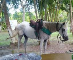 Cavalo quarto de milha animal bom *