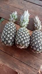 Vendo abacaxi perola de todos os tamanhos.