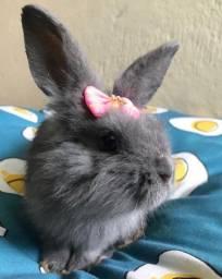 Mini coelho + gaiola