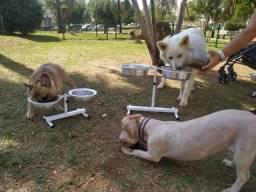Comedouro Ajustavel Relugavel para cachorro