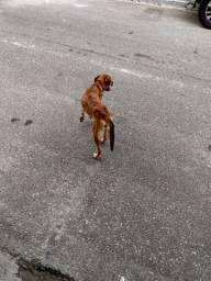 Doa-se uma cachorra fêmea leia o anúncio por favor