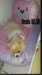 Vendo cama de pet