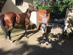 Égua Puro Sangue Inglês - 7 anos - 450kgs - Sã