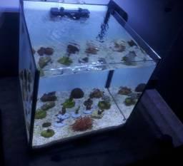 Aquario marinho completo 30x30x30