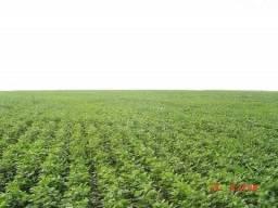 Arrendo fazenda de 500 alqueires, (para plantio de soja) mun. Anaurilândia ms
