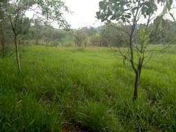 Terreno para Plantação