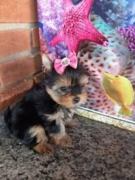 Vendo yorkshire terrier micro