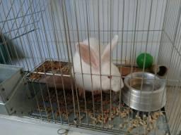 Gaiola especial para Coelho, com coelho