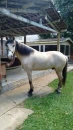Cavalo Mm Mangalarga Mineiro Baio