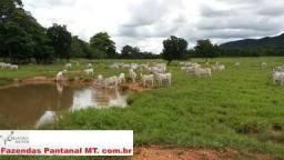 Fazenda 230 Hectares - Terra de Cultura - Municipio de Caceres MT