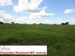 Fazenda 1.320 hectares -(Pecuaria x Lavoura) Municipio de Jangada MT