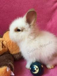 Cunicultura coelho felpudo