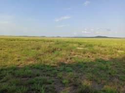 Fazenda de 1000 hectares no Bonfim/RR,