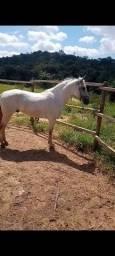Inteiro   mm sem papel macha batida  top o cavalo