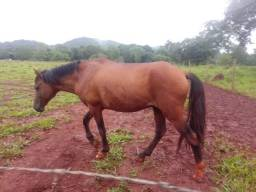 Cavalo vende ou troca