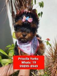 Yorkshire Terrier excelente bbs