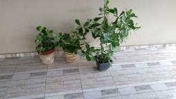 Plantas variadas .