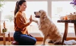 Adestramento de cães em casa