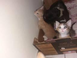 Doa-se gatinhos .(doação responsavel)
