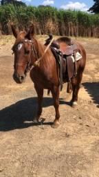 Cavalo Quarto de Milha top