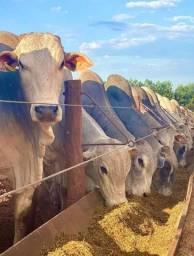 Investimento na pecuária