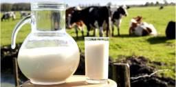 Leite de vaca em Barretos (SP)