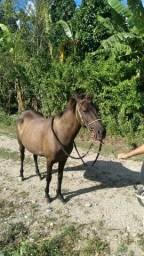 Égua Mansa Marcha Picada