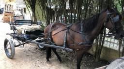 Vendo Charrete (Arranha) + égua  manga larga