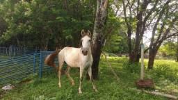 Égua e pudrinho