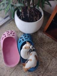 "02 Caminhas pets ""Crocs"""
