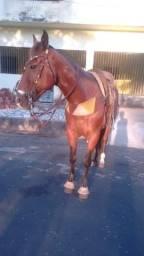 Vendo ou troco lindo cavalo